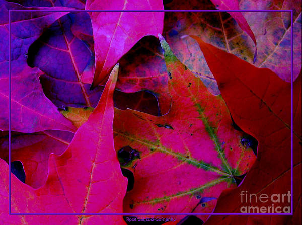 Photograph - Autumn Leaves Closeup With Cool Colors Effect by Rose Santuci-Sofranko