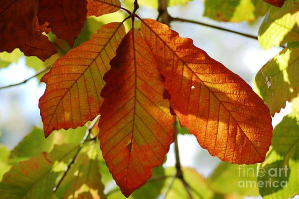 Photograph - Autumn Leaves by Donna Bentley