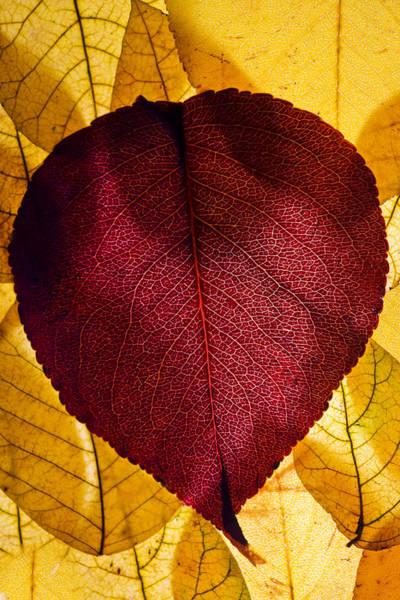 Photograph - Autumn Leaves II by Bob Decker
