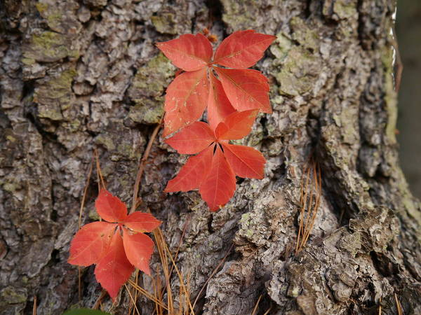 Photograph - Autumn Leaves by Richard Reeve