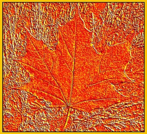 Appeal Digital Art - Autumn Maple Leaf by Will Borden