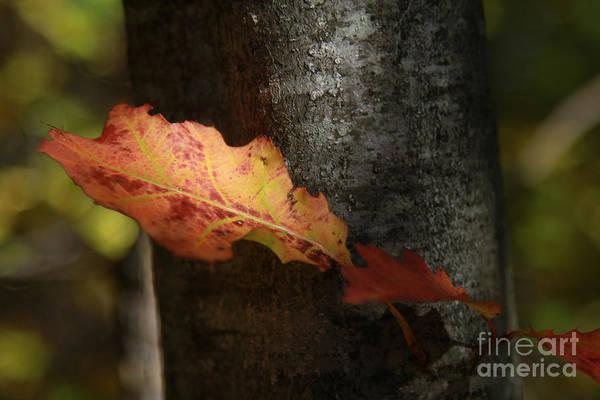 Photograph - Autumn Orange by Deborah Benoit