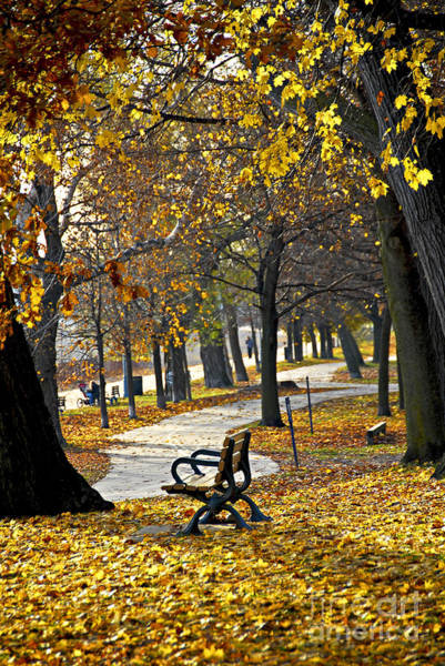 Park Bench Photograph - Autumn Park In Toronto by Elena Elisseeva