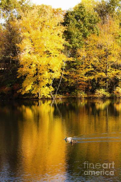 Photograph - Autumn Pond by Leslie Leda