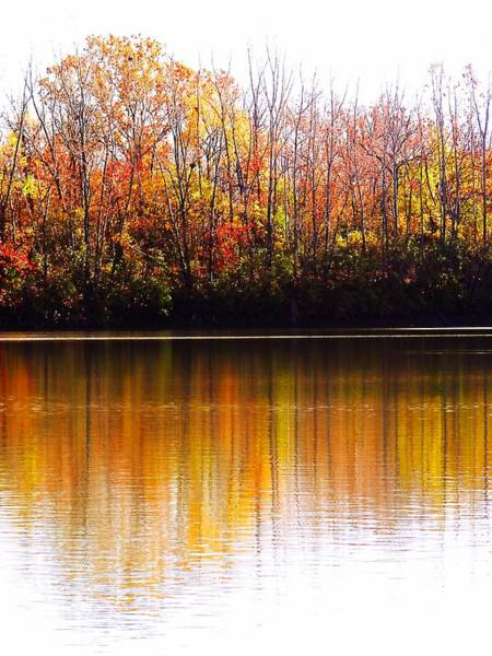 Photograph - Autumn Prairie Oaks Reflections by Beth Akerman