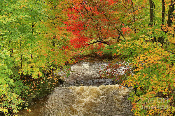 Photograph - Autumn Red By The Brook by Deborah Benoit