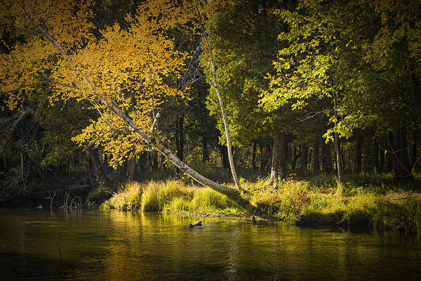 Manistee River Wall Art - Photograph - Autumn Scene Of The Little Manistee River In Michigan No. 0880 by Randall Nyhof