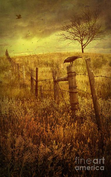 Photograph - Autumn Scene On The Prairies With Crow On Fence  by Sandra Cunningham