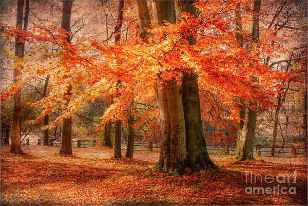 Photograph - autumn skirt I by Hannes Cmarits