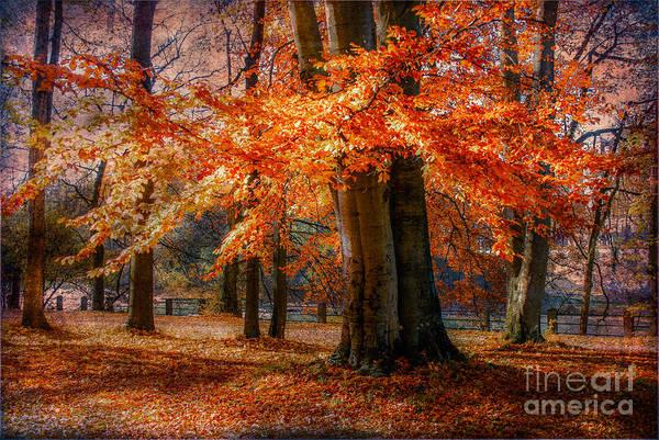 Photograph - autumn skirt III by Hannes Cmarits