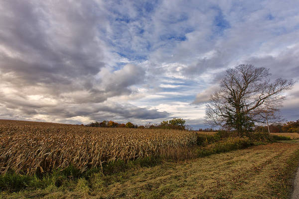 Corn Field Photograph - Autumn Sky by Rick Berk