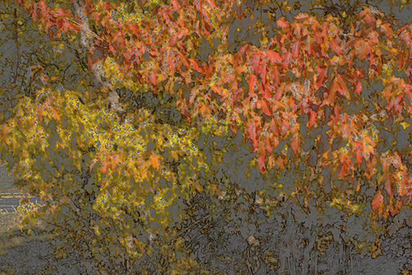 Photograph - Autumn Splash by Joanne Smoley