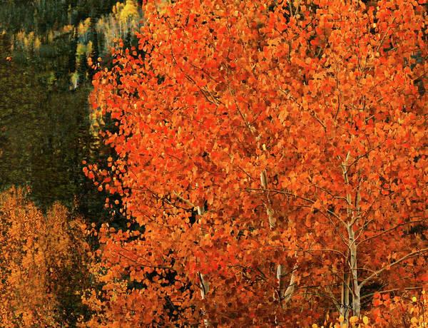 Digital Art - Autumn Splendor by Gary Baird