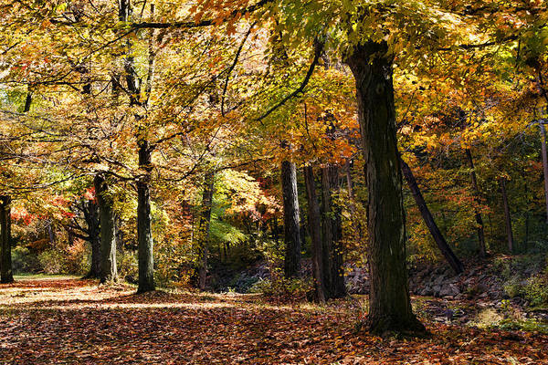 Strolling Photograph - Autumn Stroll by Peter Chilelli