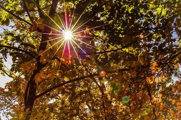 Photograph - Autumn Sunburst by Carolyn Marshall