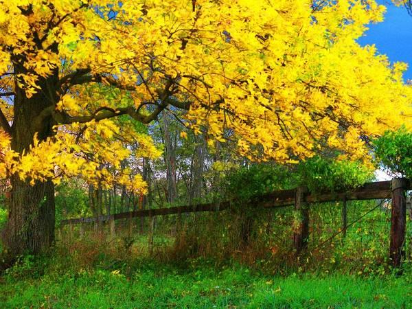 Wall Art - Photograph - Autumn Sunshine by Joyce Kimble Smith