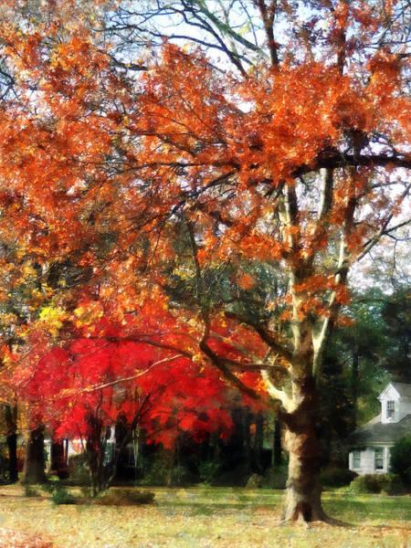 Photograph - Autumn Sycamore Tree by Susan Savad