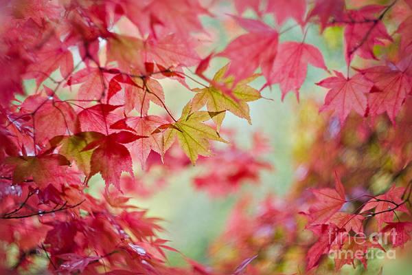 Stourhead Wall Art - Photograph - Autumn Tapastry by Jacky Parker