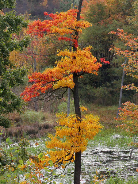 Clarion Photograph - Autumn Tree by Mark Moore