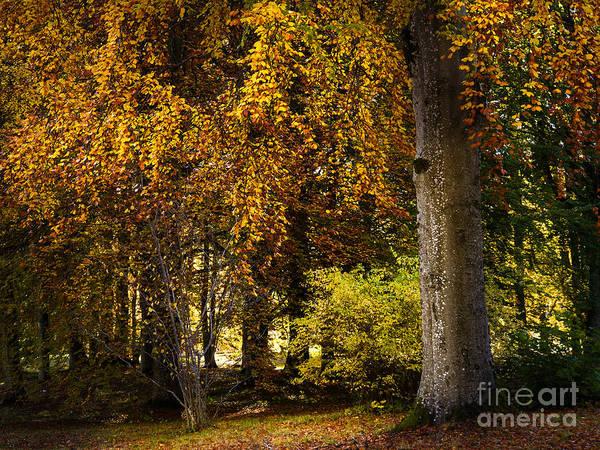 Photograph - Autumn Trees by Lutz Baar