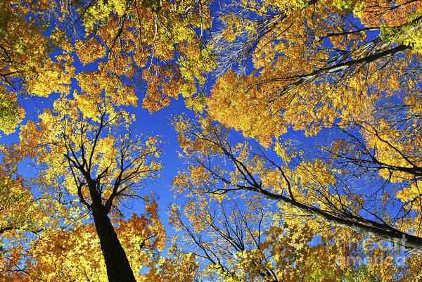 Wall Art - Photograph - Autumn Treetops by Elena Elisseeva