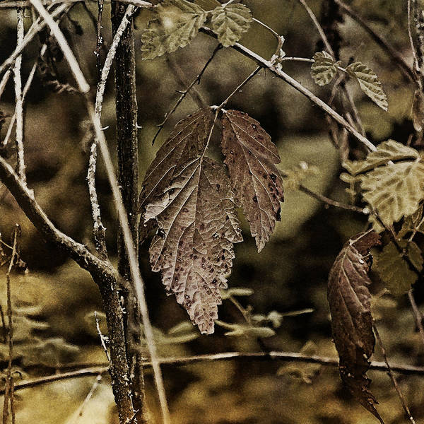 Earthtones Photograph - Autumn Whispers by Bonnie Bruno