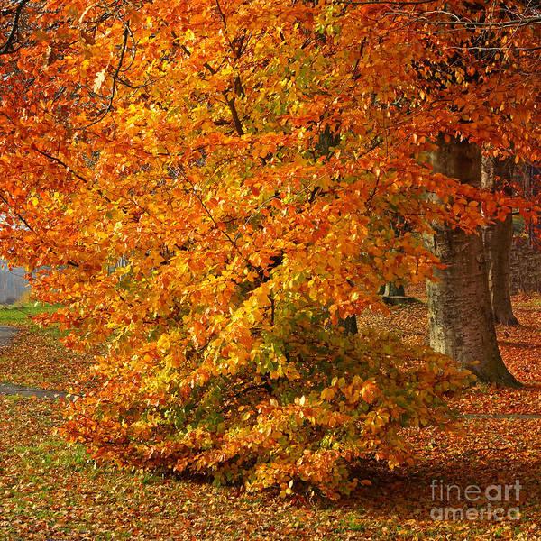 Photograph - Autumn Wonder by Lutz Baar