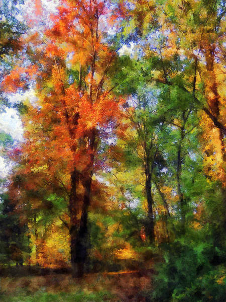 Photograph - Autumn Woods by Susan Savad