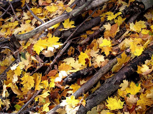 Autumn Leaves Photograph - Autumnal Melody by Leon Zernitsky