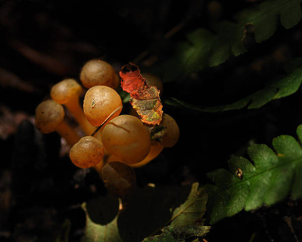 Mushrooms Photograph - Autumnal Things by Susan Capuano