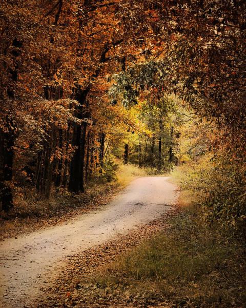Photograph - Autumn's Canopy by Jai Johnson