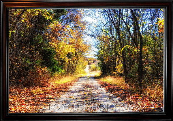 Photograph - Autumns Passage by Royce Bishop