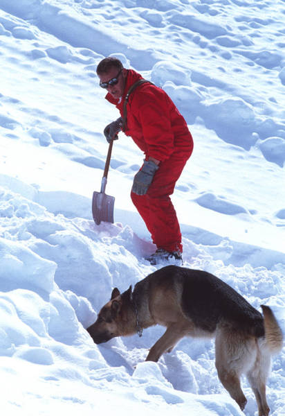 Service Dog Photograph - Avalanche Rescue by Mauro Fermariello