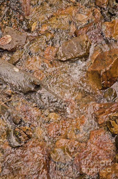 Photograph - Babbling Brook by Donna Greene