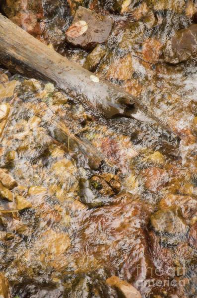Photograph - Babbling Brook II by Donna Greene