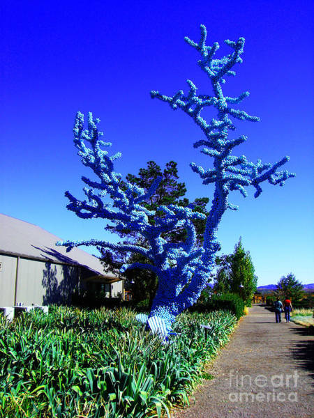 Photograph - Baby Blue Tree by Xueling Zou