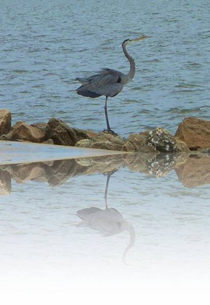 Photograph - Back To The Wind Reflection by Judy Hall-Folde