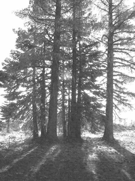 Photograph - Backlit Trees by Frank Wilson