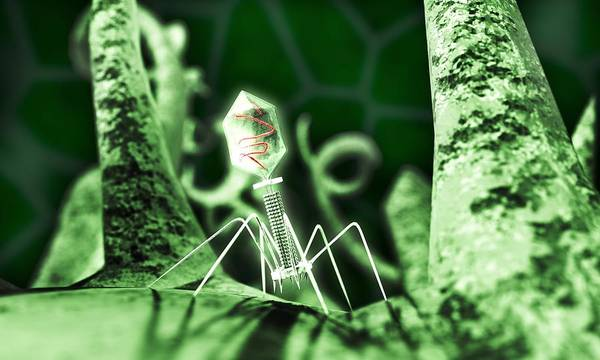 Wall Art - Photograph - Bacteriophage Virus, Artwork by Equinox Graphics