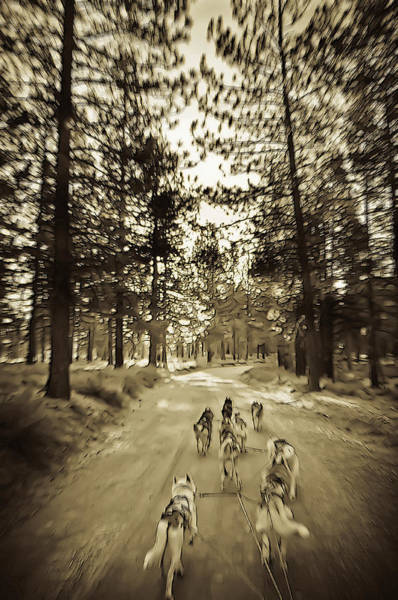 Photograph - Badas Musher's Team 2 by Sherri Meyer