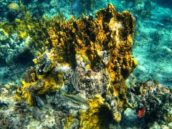 Photograph - Bahamas 049 by Lance Vaughn