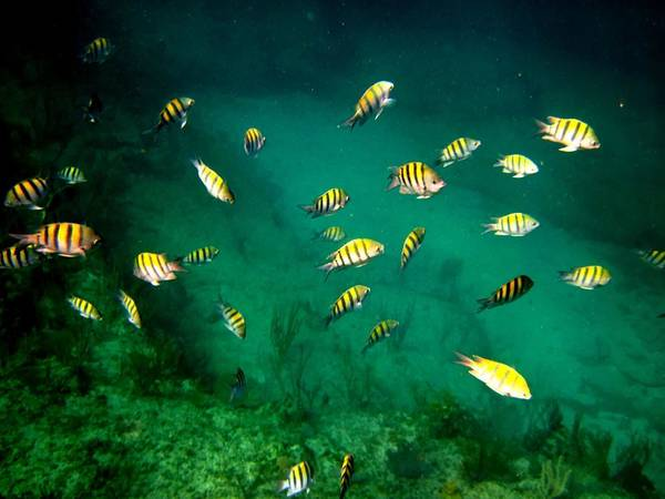 Photograph - Bahamas 055 by Lance Vaughn