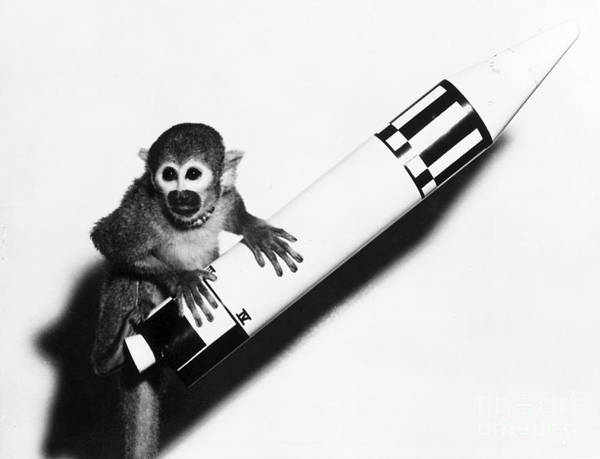 Squirrel Monkey Wall Art - Photograph - Baker, First Monkey In Space by Science Source