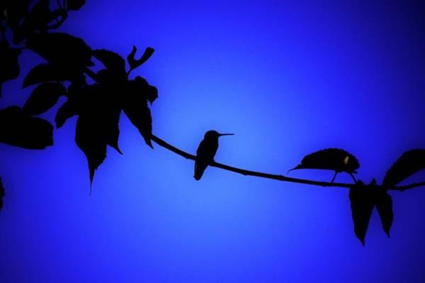 Wall Art - Photograph - Balancing Act by Helen Carson
