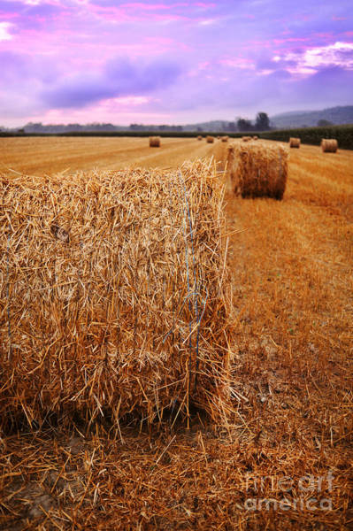 Wall Art - Photograph - Bales Of Hay At Sunrise by HD Connelly
