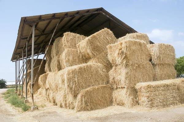 Kibbutz Photograph - Bales Of Straw, Israel by Photostock-israel