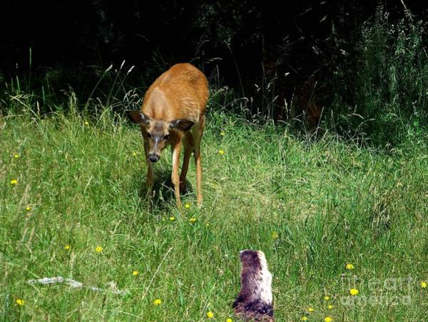 Photograph - Bambi Meets Harry by Charles Robinson