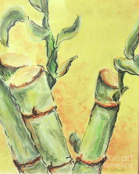 Drawing - Bamboo by Norma Gafford