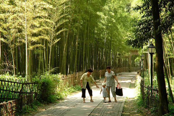 Photograph - Bamboo Road by Harry Spitz