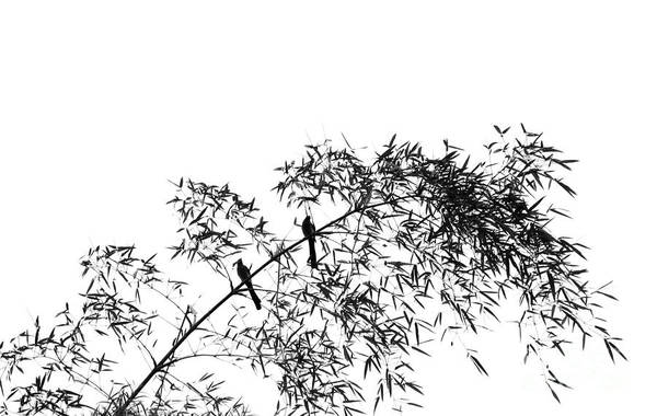 Bamboo Shoots Photograph - Bamboo Tree With Two Birds by Yali Shi